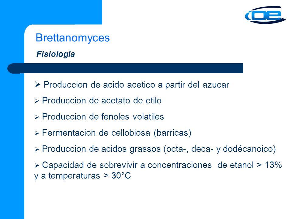 Brettanomyces  Produccion de acido acetico a partir del azucar