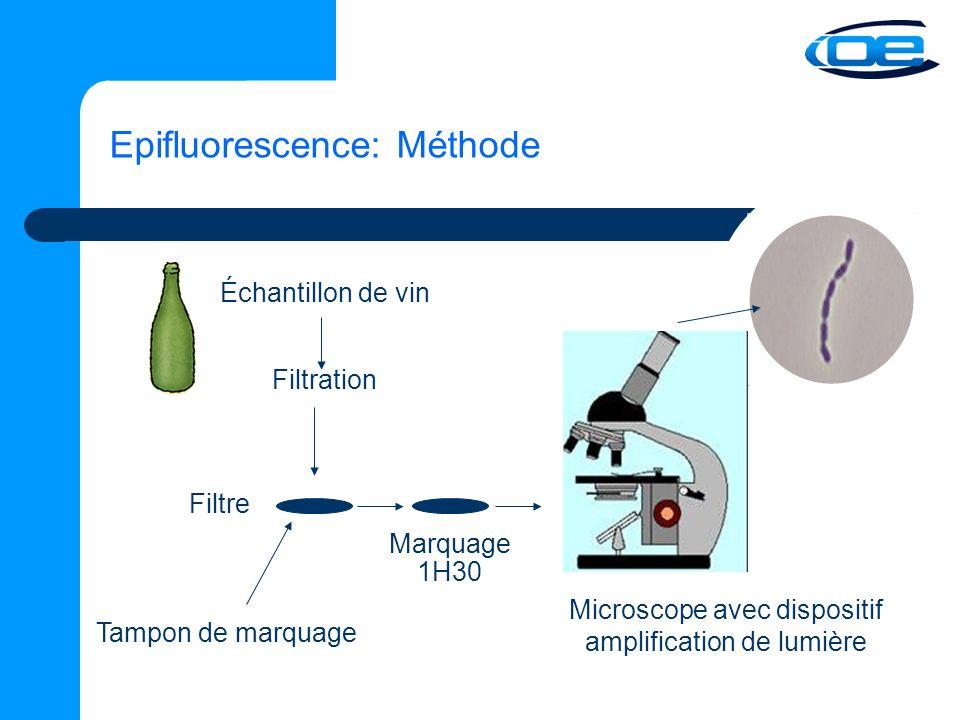 Microscope avec dispositif amplification de lumière
