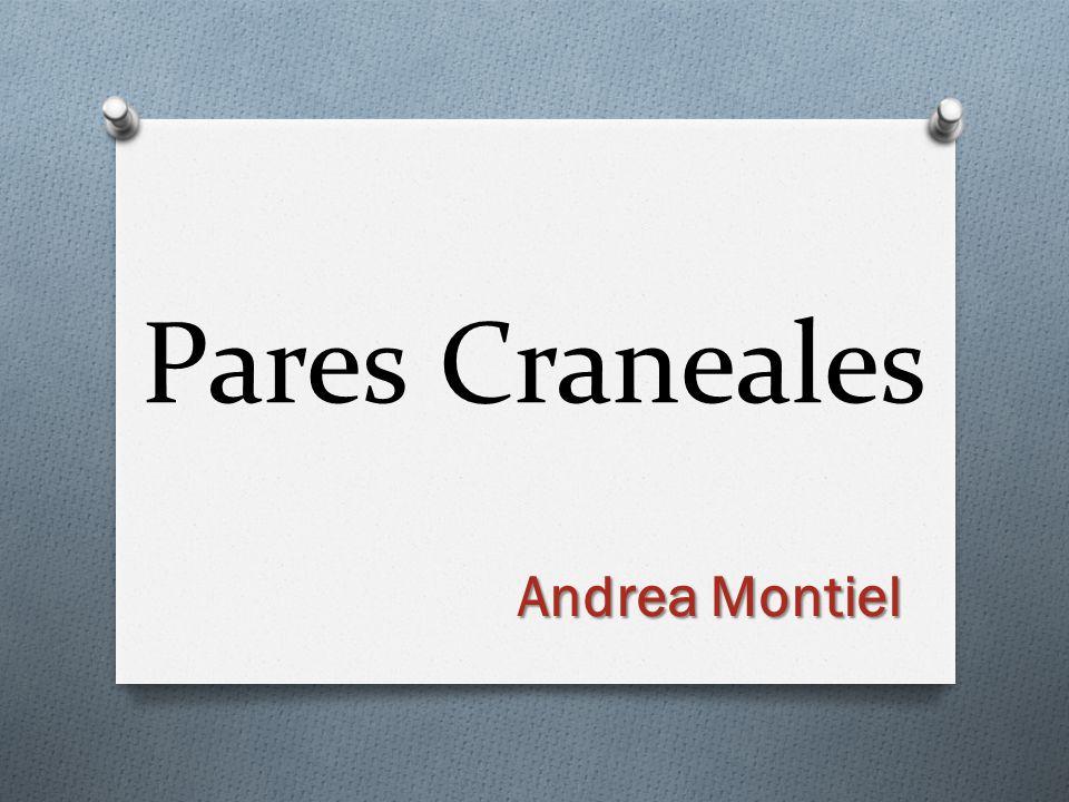 Pares Craneales Andrea Montiel
