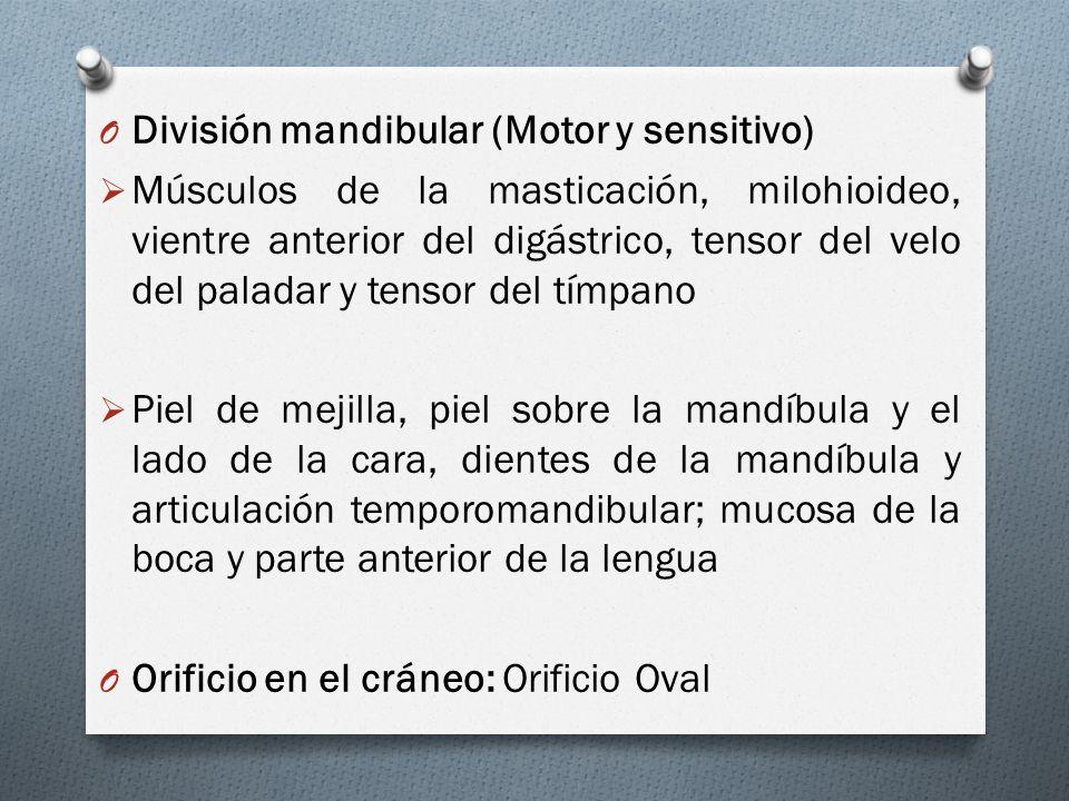 División mandibular (Motor y sensitivo)