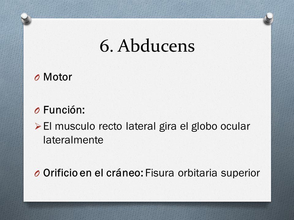 6. Abducens Motor Función: