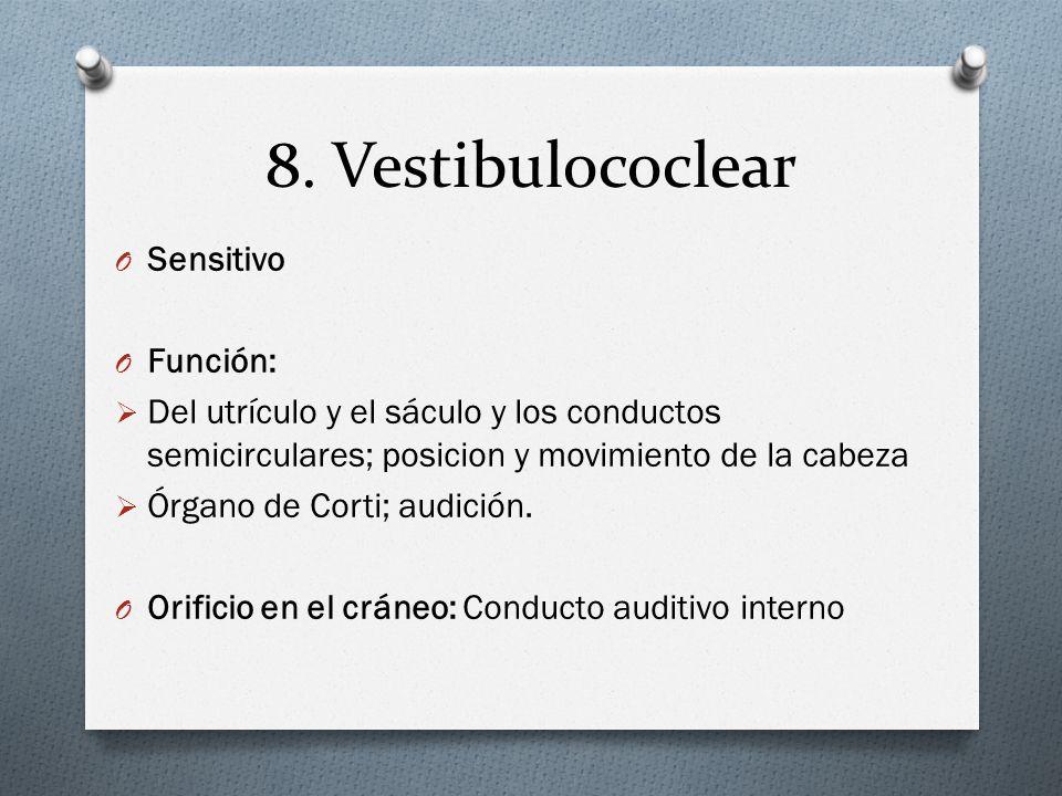 8. Vestibulococlear Sensitivo Función: