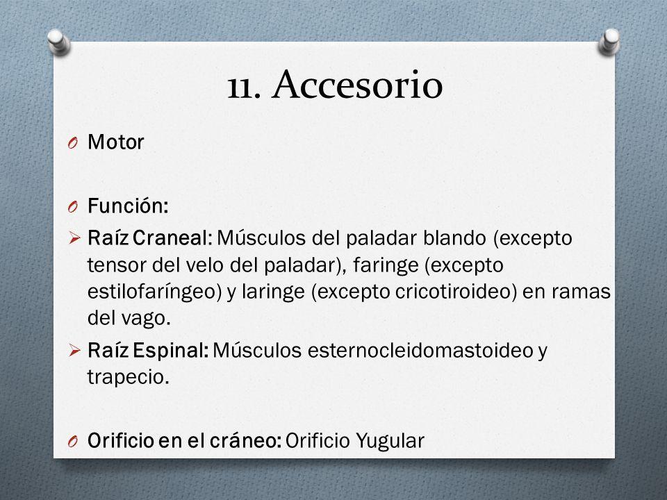 11. Accesorio Motor Función: