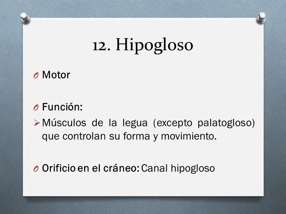 12. Hipogloso Motor Función: