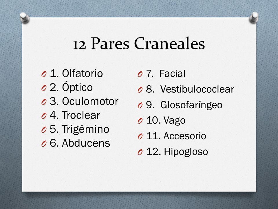 12 Pares Craneales 1. Olfatorio 2. Óptico 3. Oculomotor 4. Troclear