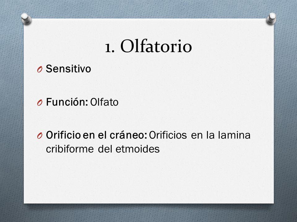 1. Olfatorio Sensitivo Función: Olfato