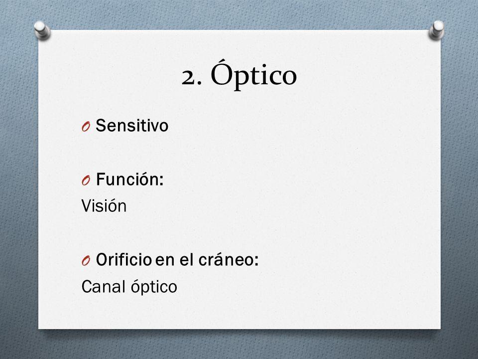 2. Óptico Sensitivo Función: Visión Orificio en el cráneo: