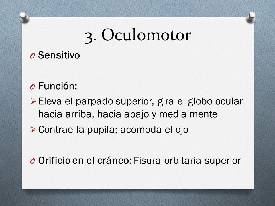 3. Oculomotor Sensitivo Función: