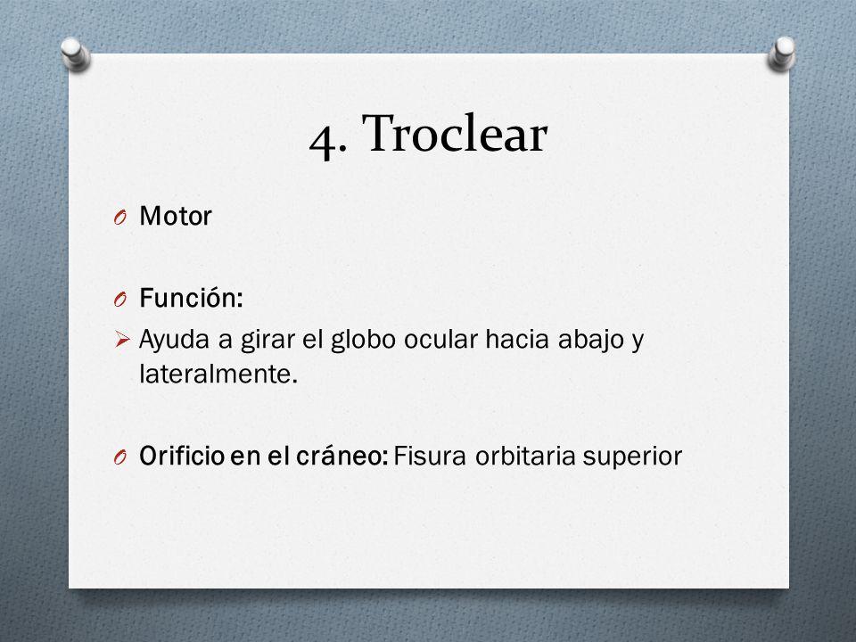 4. Troclear Motor Función: