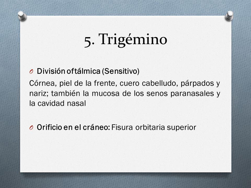 5. Trigémino División oftálmica (Sensitivo)