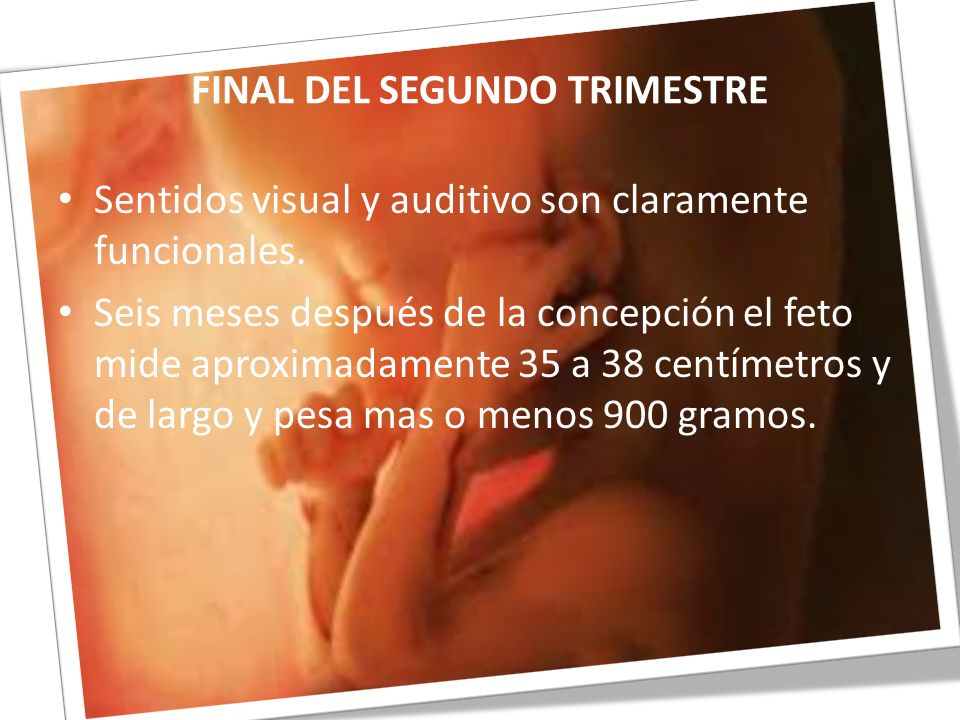 FINAL DEL SEGUNDO TRIMESTRE