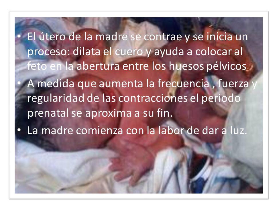 El útero de la madre se contrae y se inicia un proceso: dilata el cuero y ayuda a colocar al feto en la abertura entre los huesos pélvicos
