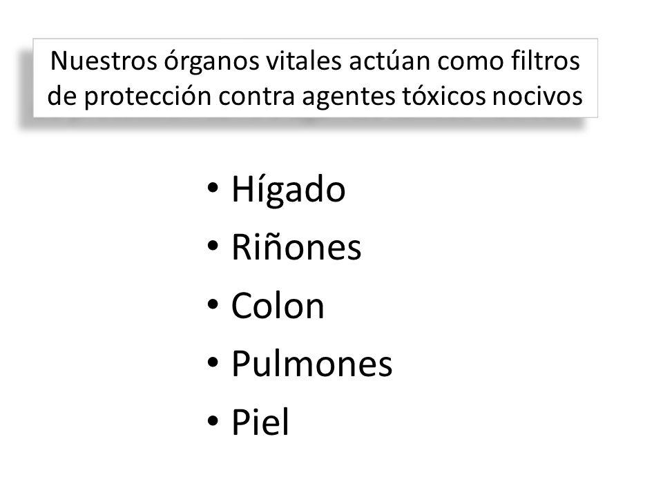 Hígado Riñones Colon Pulmones Piel