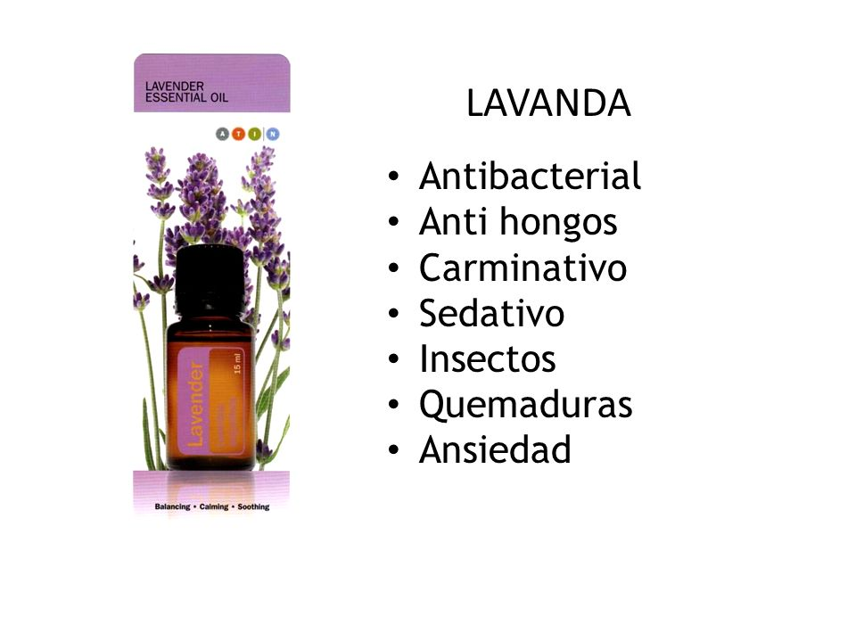 LAVANDA Antibacterial Anti hongos Carminativo Sedativo Insectos