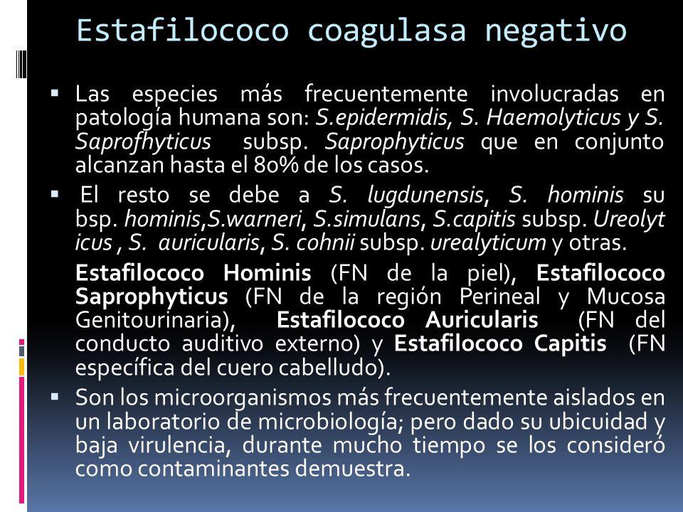 Estafilococo coagulasa negativo