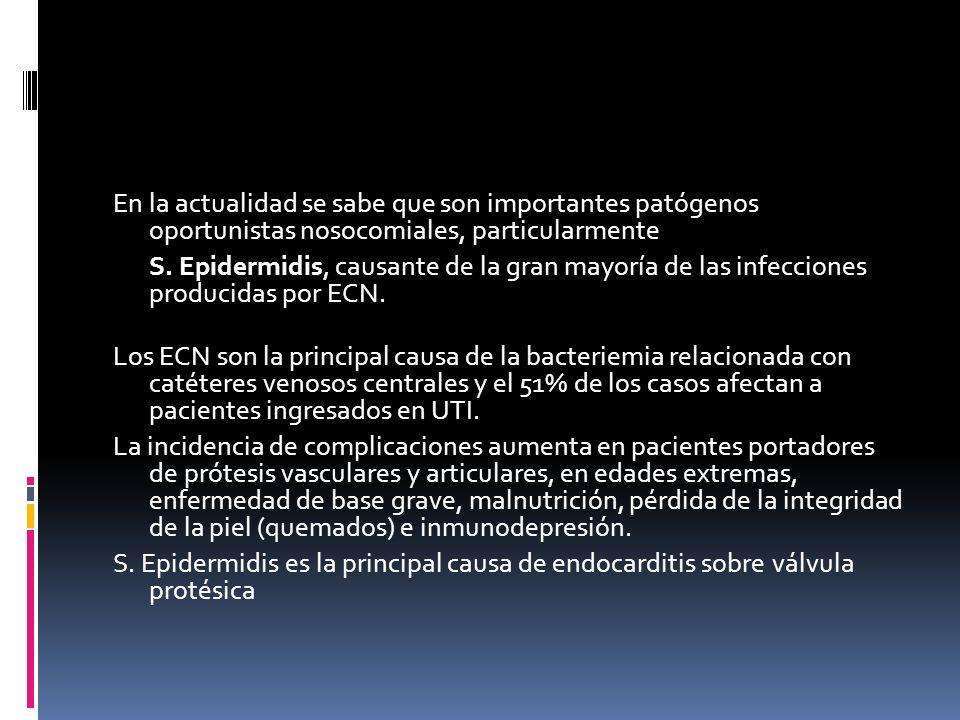 En la actualidad se sabe que son importantes patógenos oportunistas nosocomiales, particularmente S.