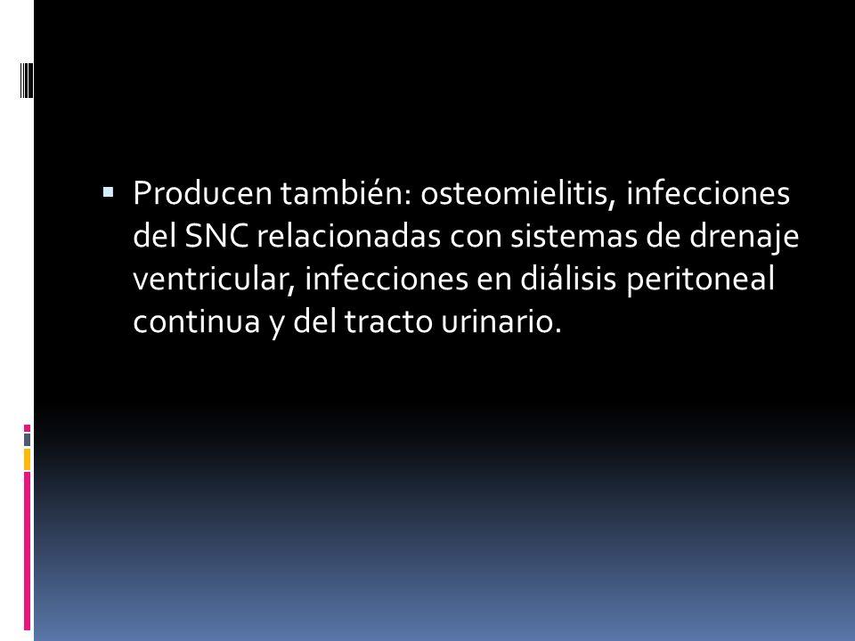 Producen también: osteomielitis, infecciones del SNC relacionadas con sistemas de drenaje ventricular, infecciones en diálisis peritoneal continua y del tracto urinario.