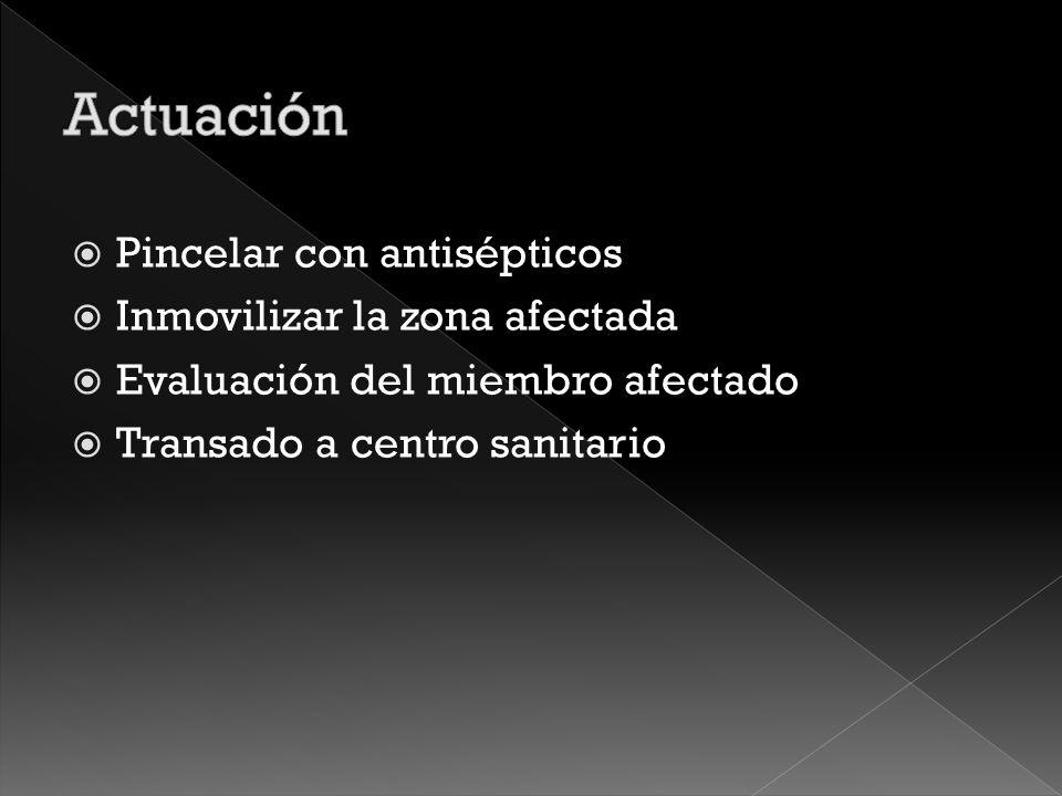 Actuación Pincelar con antisépticos Inmovilizar la zona afectada