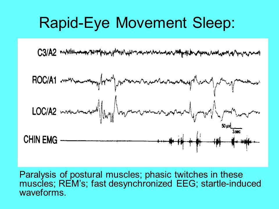 Rapid-Eye Movement Sleep: