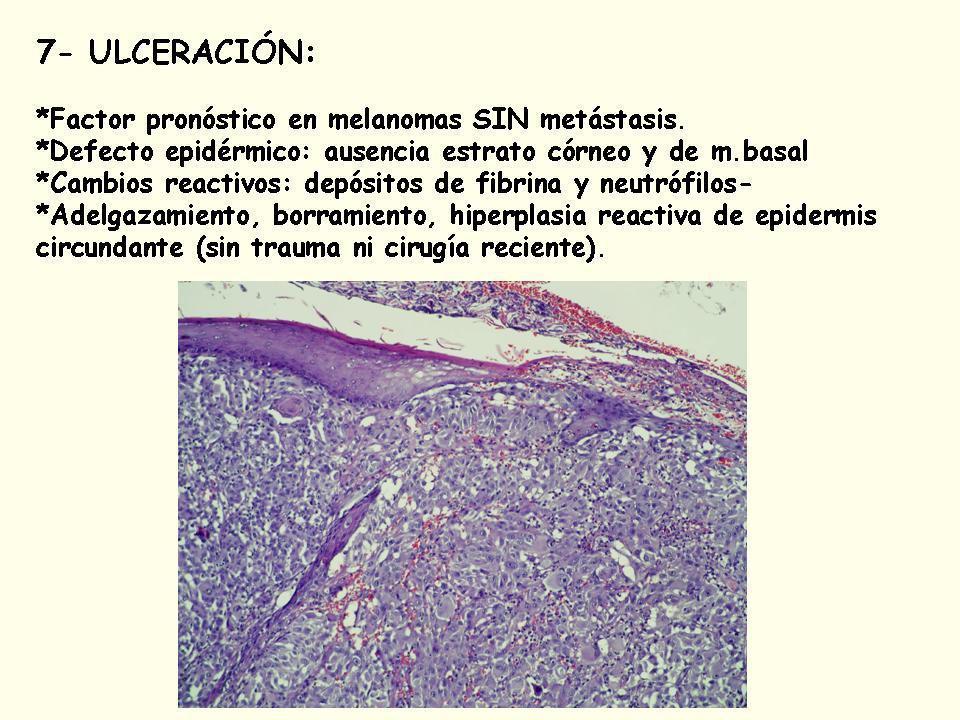 6.- Tamaño del tumor: sólo si es visible al estudio macroscópico.