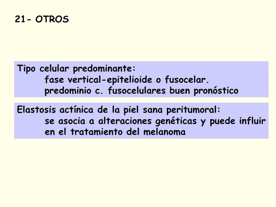 Tipo celular predominante: fase vertical-epitelioide o fusocelar.