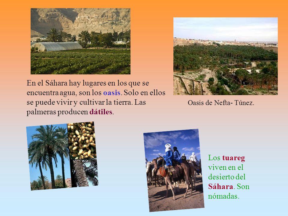 Los tuareg viven en el desierto del Sáhara. Son nómadas.