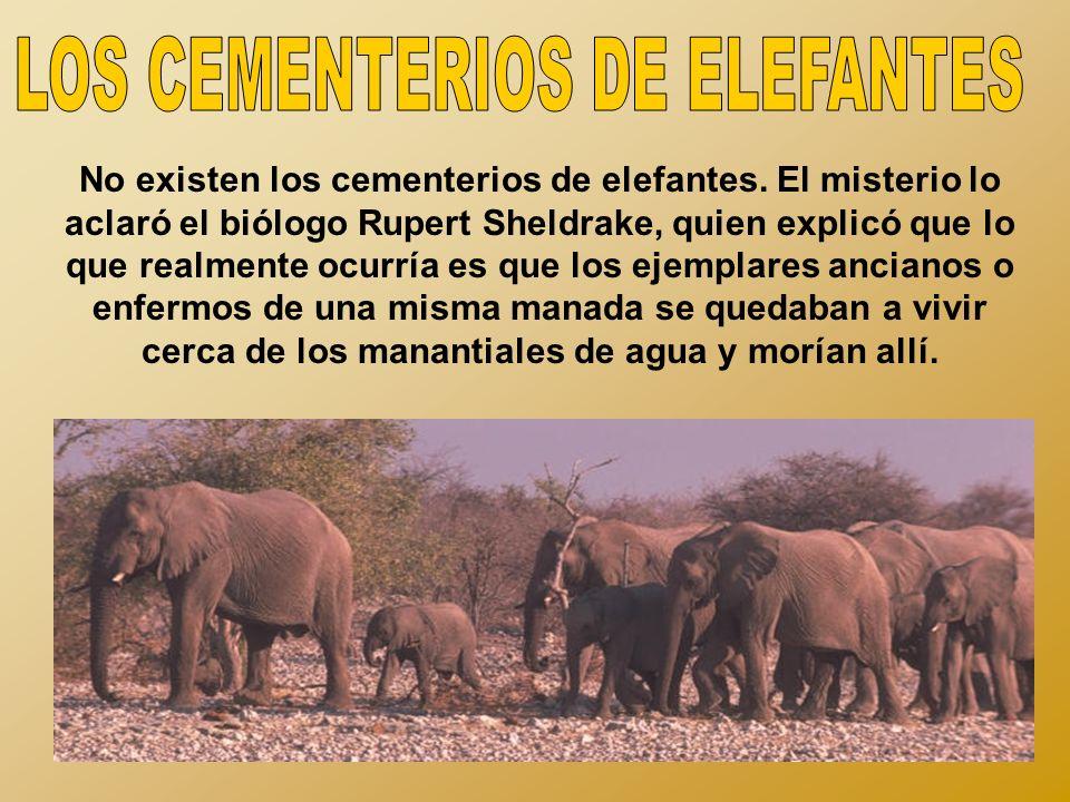 LOS CEMENTERIOS DE ELEFANTES