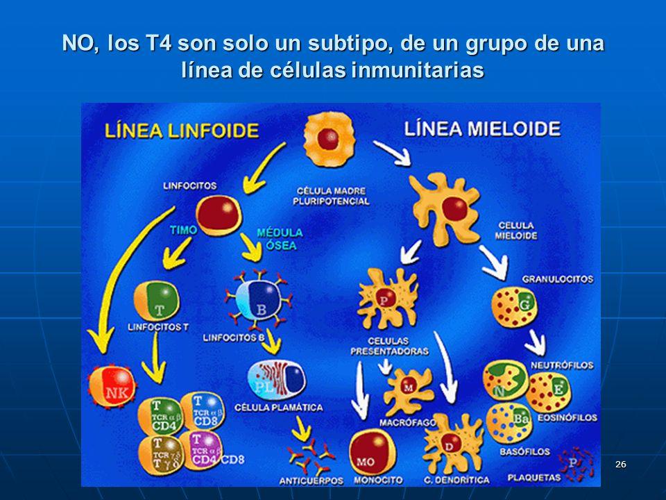 NO, los T4 son solo un subtipo, de un grupo de una línea de células inmunitarias