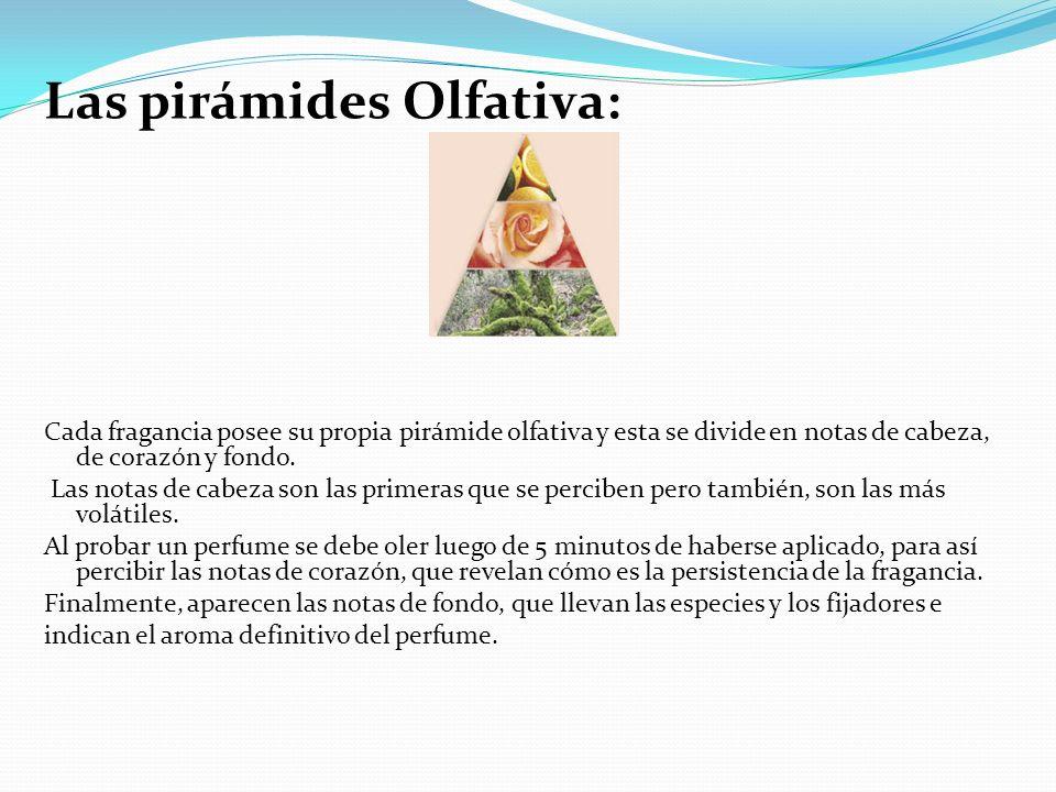 Las pirámides Olfativa: