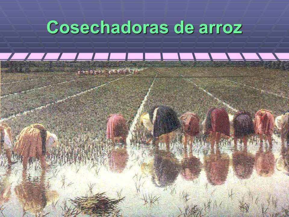 Cosechadoras de arroz