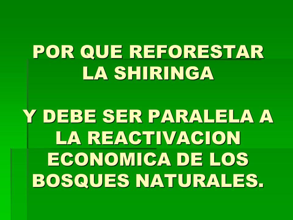 POR QUE REFORESTAR LA SHIRINGA Y DEBE SER PARALELA A LA REACTIVACION ECONOMICA DE LOS BOSQUES NATURALES.