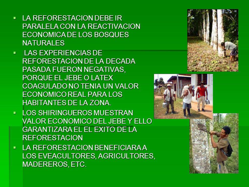 LA REFORESTACION DEBE IR PARALELA CON LA REACTIVACION ECONOMICA DE LOS BOSQUES NATURALES