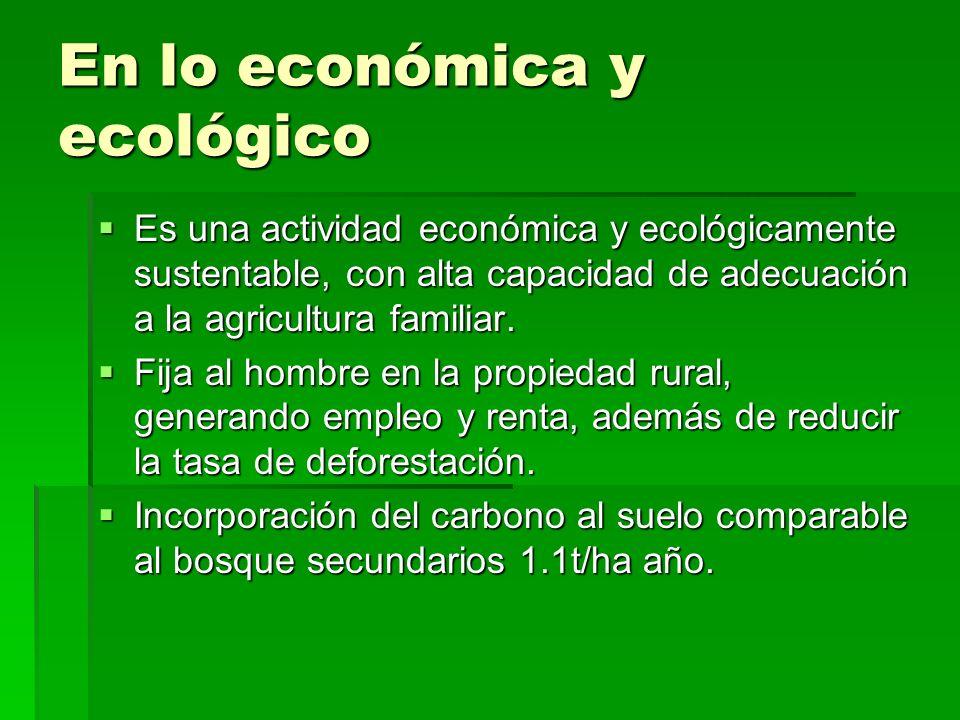 En lo económica y ecológico