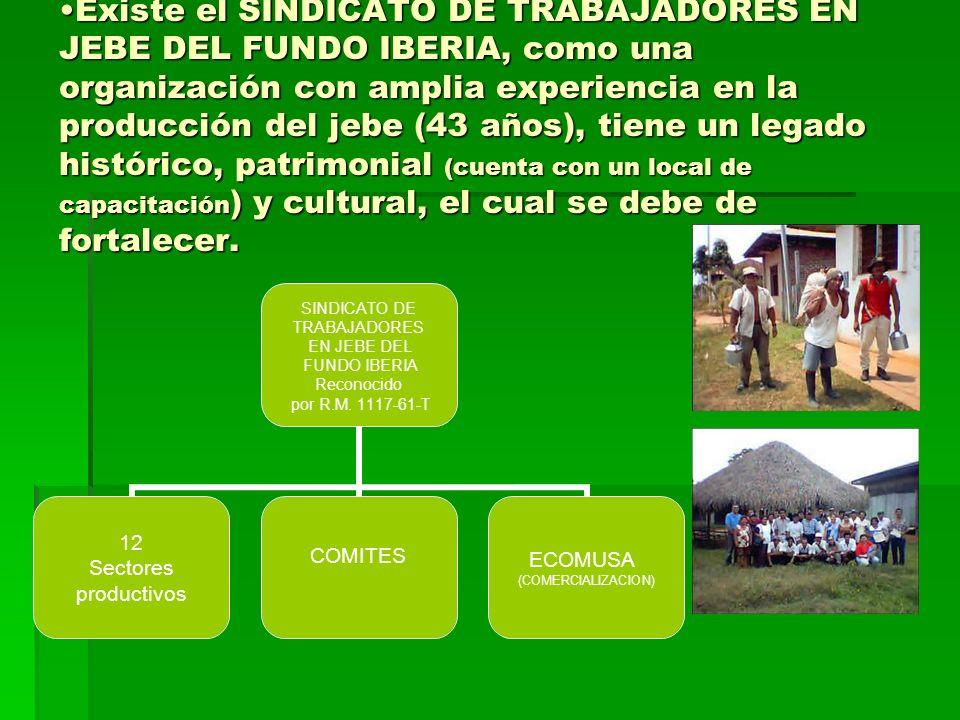 Existe el SINDICATO DE TRABAJADORES EN JEBE DEL FUNDO IBERIA, como una organización con amplia experiencia en la producción del jebe (43 años), tiene un legado histórico, patrimonial (cuenta con un local de capacitación) y cultural, el cual se debe de fortalecer.