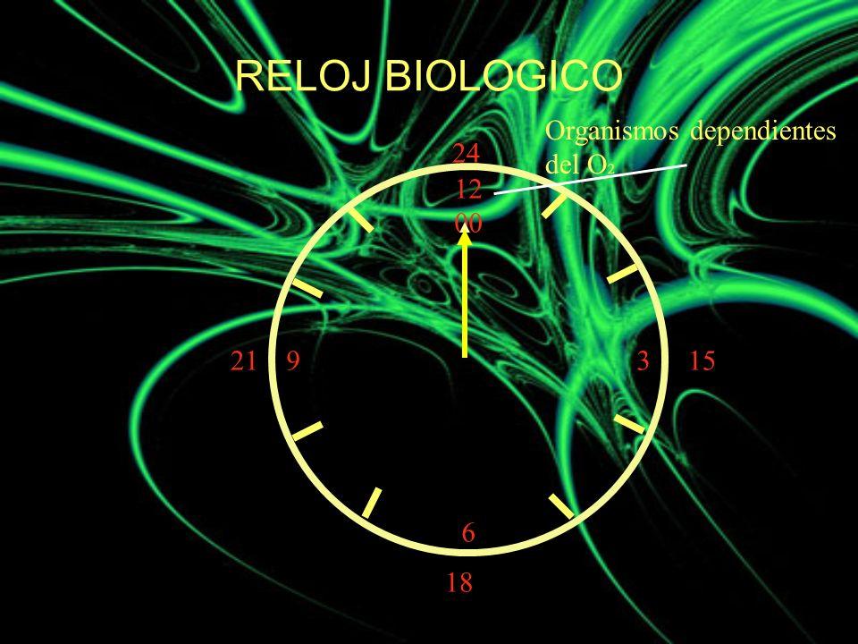 RELOJ BIOLOGICO Organismos dependientes del O2 24 12 00 3 6 21 15 18