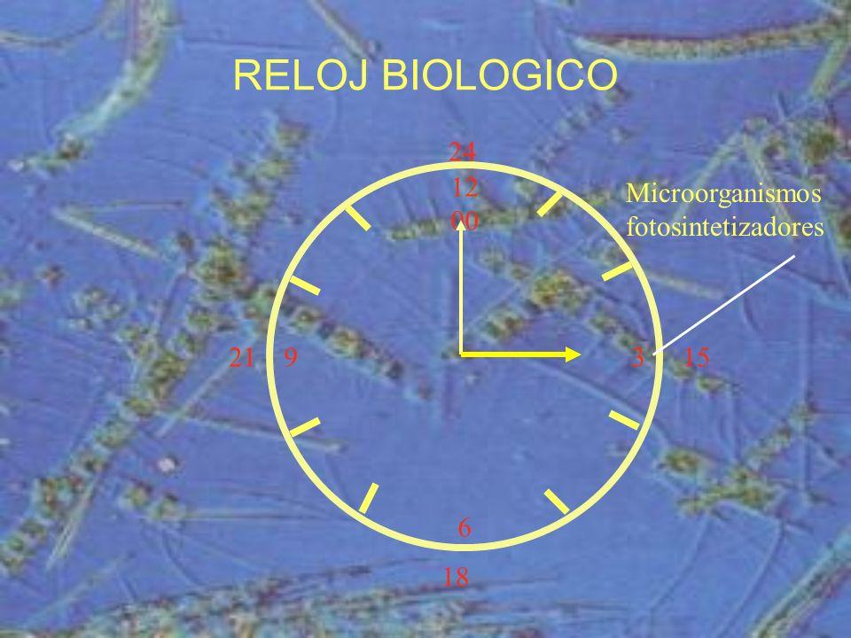 RELOJ BIOLOGICO 24 12 00 3 6 Microorganismos fotosintetizadores 21 15