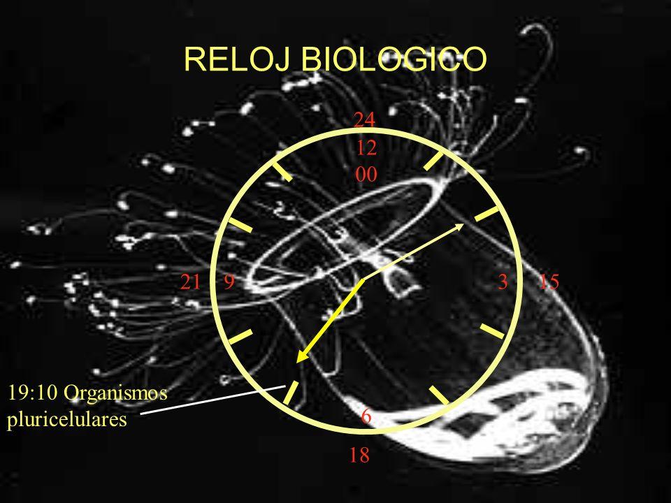 RELOJ BIOLOGICO 24 12 00 3 6 21 15 19:10 Organismos pluricelulares 18