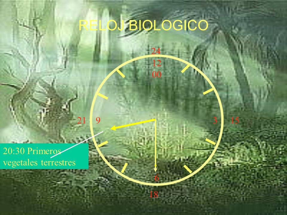 RELOJ BIOLOGICO 24 12 00 3 6 21 15 20:30 Primeros vegetales terrestres