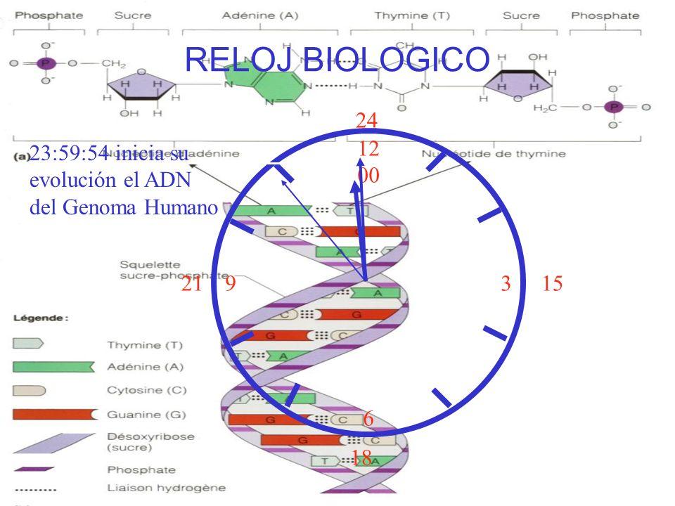 RELOJ BIOLOGICO 24 12 00 3 6 23:59:54 inicia su evolución el ADN del Genoma Humano 21 15 18