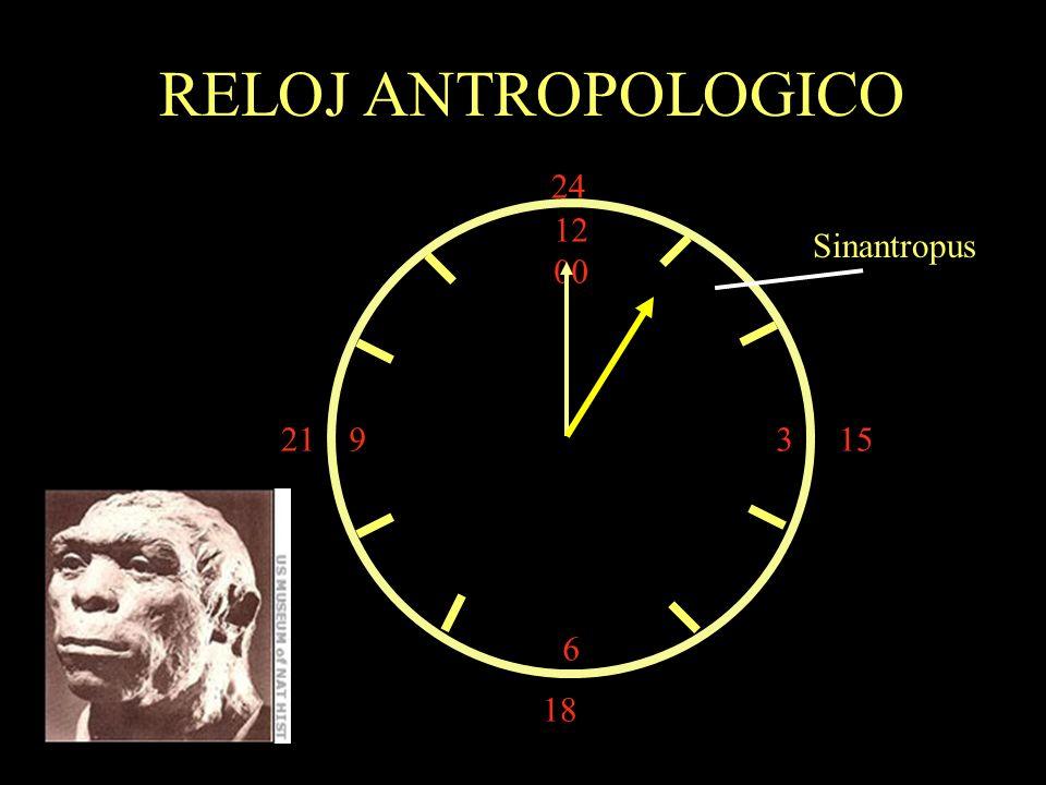 RELOJ ANTROPOLOGICO 24 12 00 3 6 Sinantropus 21 15 18
