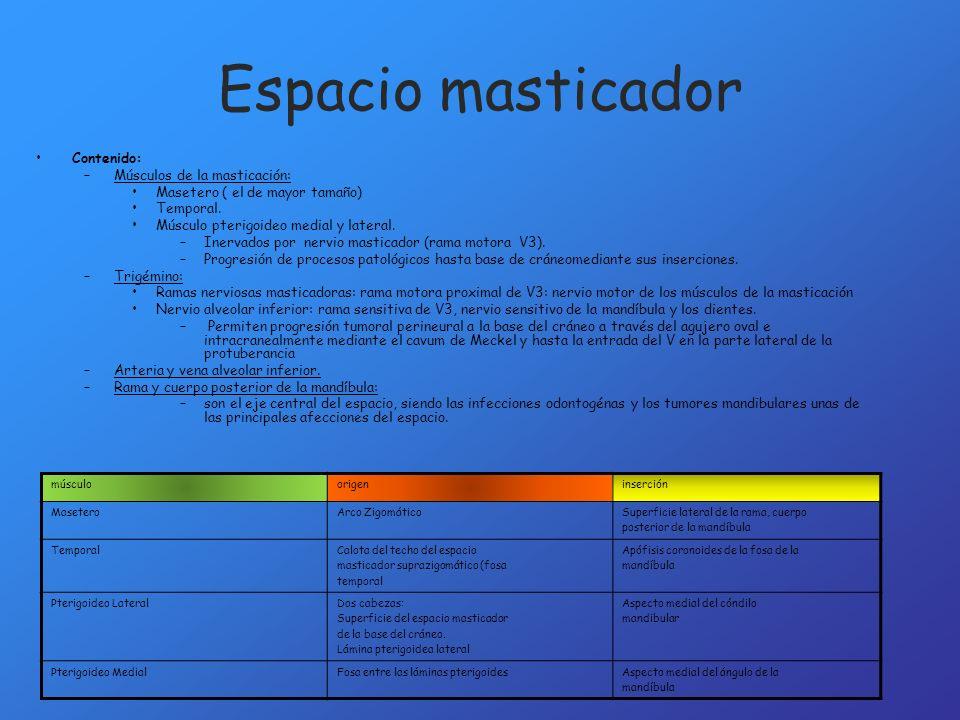 Espacio masticador Contenido: Músculos de la masticación: