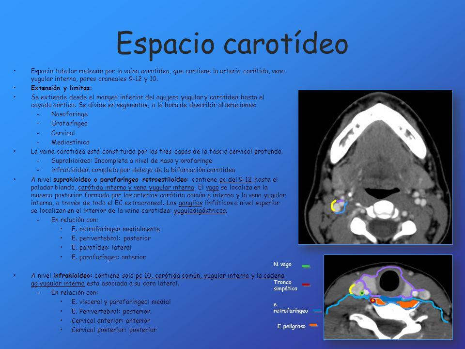 Espacio carotídeoEspacio tubular rodeado por la vaina carotídea, que contiene la arteria carótida, vena yugular interna, pares craneales 9-12 y 10.