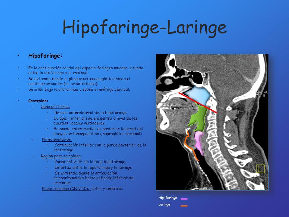 Hipofaringe-Laringe Hipofaringe: