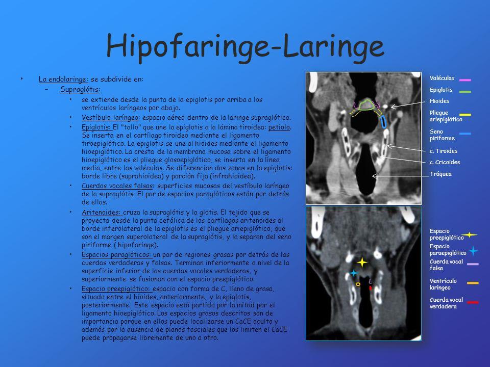 Hipofaringe-Laringe La endolaringe: se subdivide en: Supraglótis: