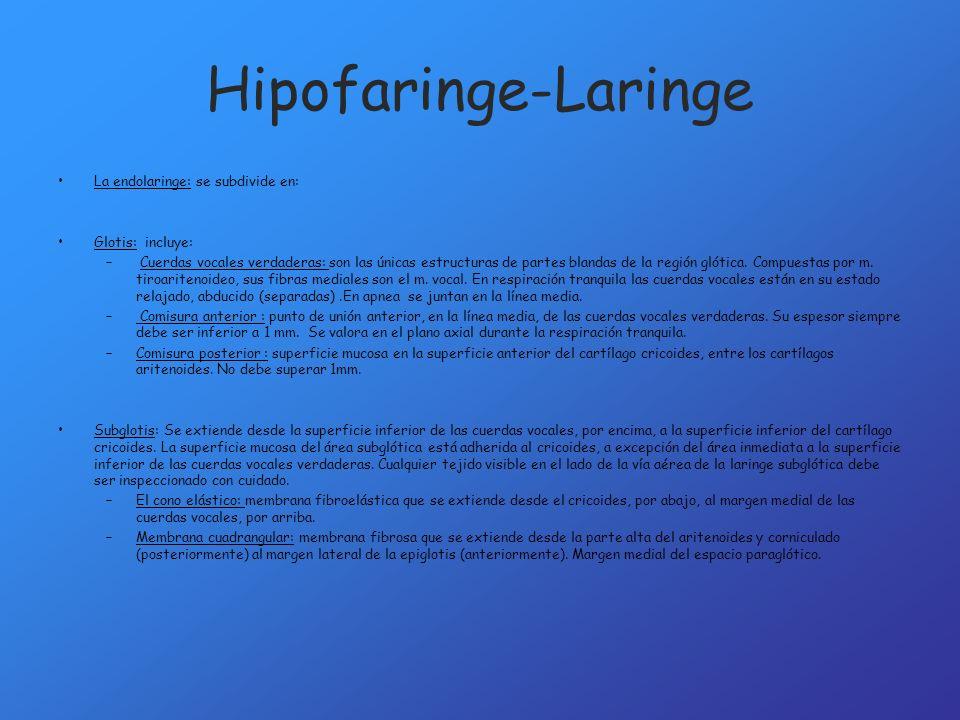Hipofaringe-Laringe La endolaringe: se subdivide en: Glotis: incluye: