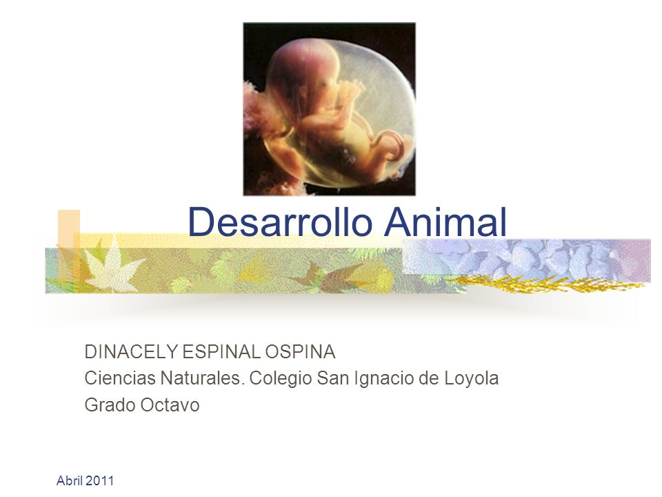 Desarrollo Animal DINACELY ESPINAL OSPINA