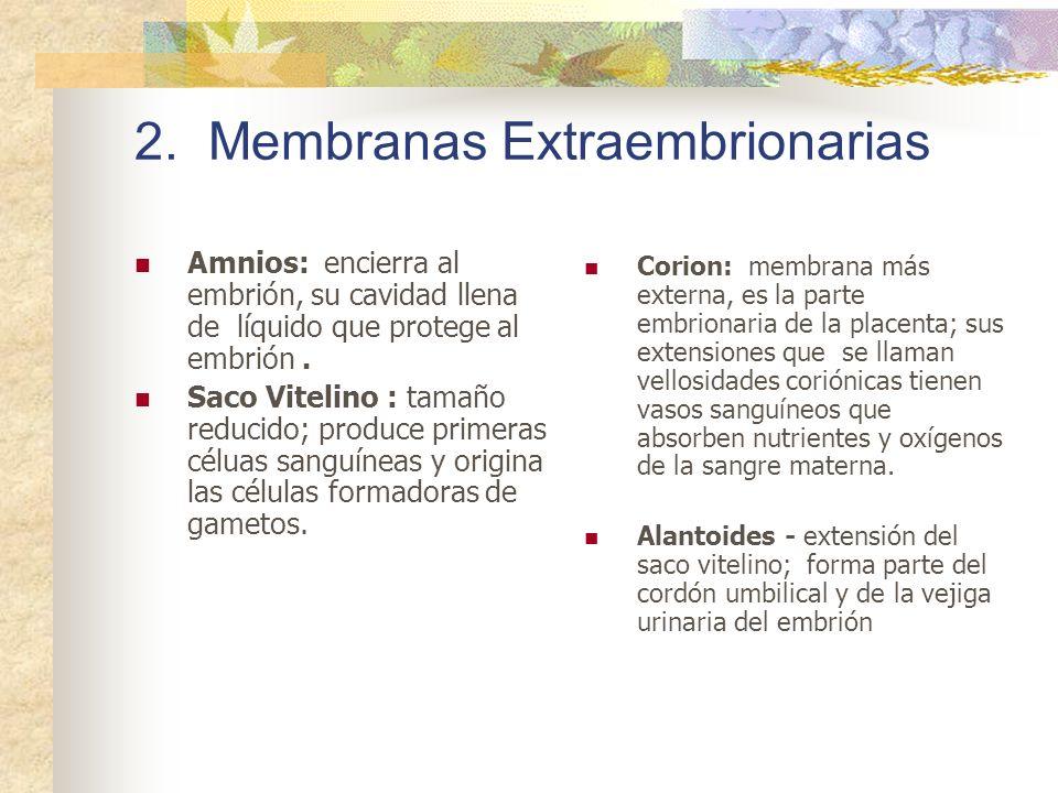2. Membranas Extraembrionarias