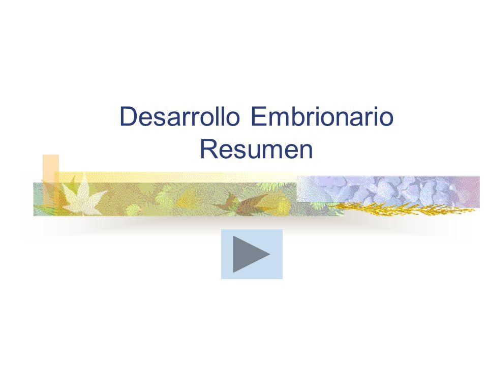 Desarrollo Embrionario Resumen
