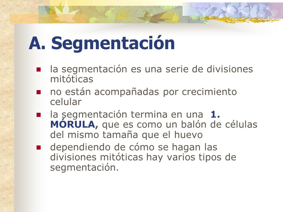 A. Segmentación la segmentación es una serie de divisiones mitóticas