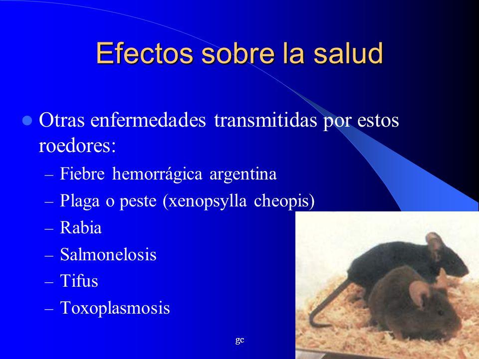 Efectos sobre la salud Otras enfermedades transmitidas por estos roedores: Fiebre hemorrágica argentina.